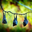 Bats Fern Pool