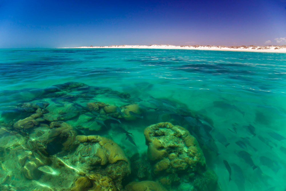 Ningaloo reef fish